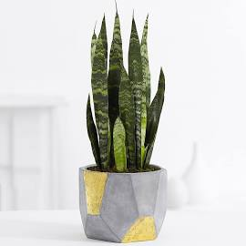 The Benefits of Interior Plants as Decor